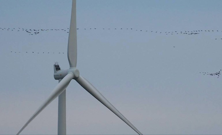 Wind delivers '15% of European power in 2020'